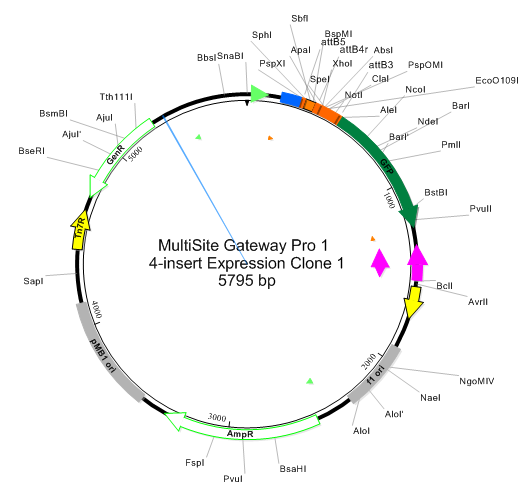 Plos one: a gateway multisite recombination cloning toolkit.