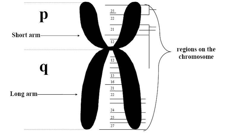 Abbreviation of assignment