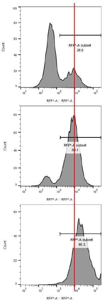 Comparison of RFP+ cells vs. puromycin-resistant, RFP+ cells.